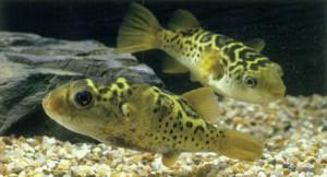 Солоноватоводный или морской аквариум, фото