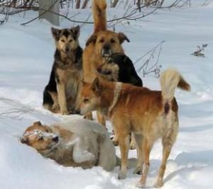 Способность к выживанию у собак