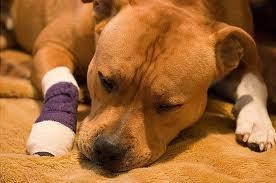 Стоит ли доверять ветеринару
