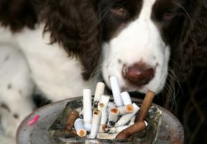 Табачный дым и животные