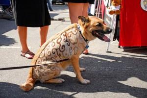 Татуировка для собаки