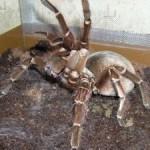 Uhod za paukami