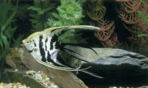 Выбор рыб и растений