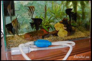 Замена воды в аквариуме, фото